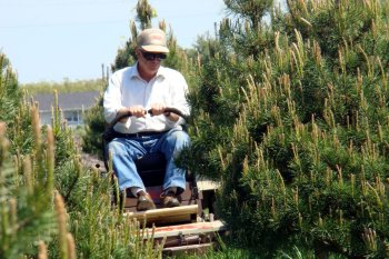 Christmas tree farmer benefits from Grasshopper maneuverability
