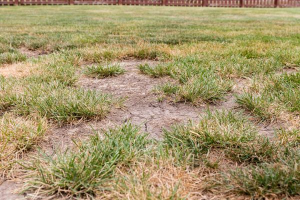Dead Spots In Your Grass